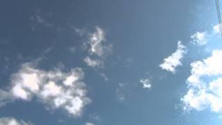 Голуби Самары. Гон молодняка николаевских голубей в Самаре. 28.07.14г.
