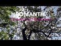 William Last KRM_Gao Romantic (Akulaleki Cover) Director ...