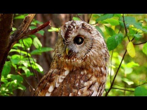 Habitats: Woodlands [CLIP]