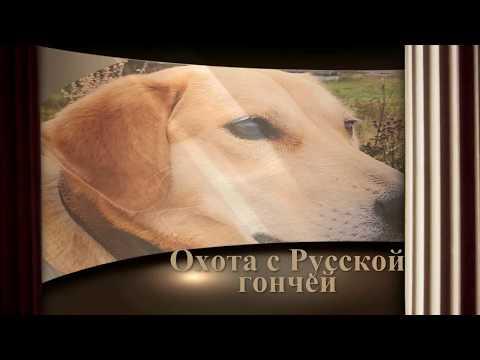 Охота  с Русской гончей на зайца 13 11 19
