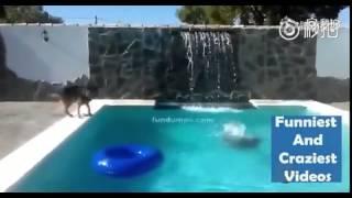 主人假装溺水逗狗狗玩 没想到它当真了