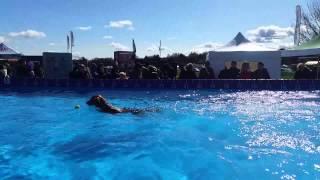 Tuzzi Dock Diving