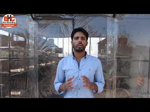 Parinda Bazar Birds Sale and Purchase Point Video Urdu/Hindi