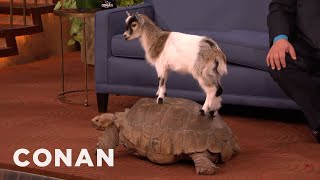Animal Expert David Mizejewski: Capuchin Monkey, Caracal, Giant Tortoise & Goat   CONAN on TBS