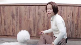 [강아지 훈련] 개인기훈련 - 굴러! 알려주기