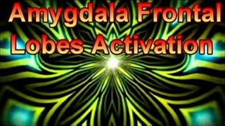 Amygdala Frontal Lobes Activation The Golden Flower Meditation