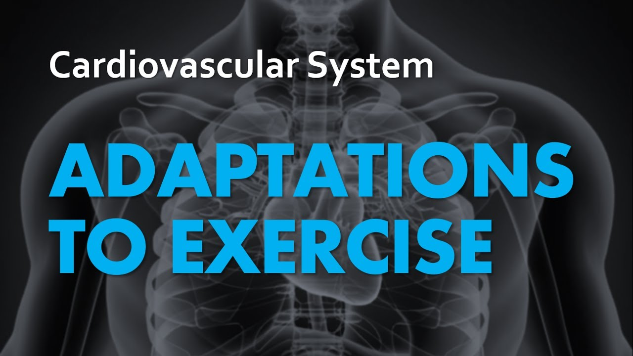 Anatomy & Physiology | Adaptations to Exercise: The Cardiovascular ...