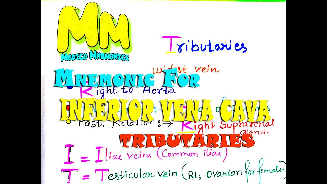 Mnemonic For Inferior Vena Cava Tribuitaries An Anatomy Mnemonic