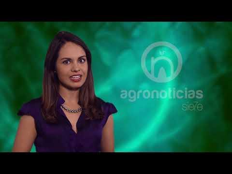 AGRONOTICIAS sie7e PROGRAMA 60
