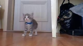 Упрямый котенок и  неумолимая, строгая мама-кошка. Приколы кошки.