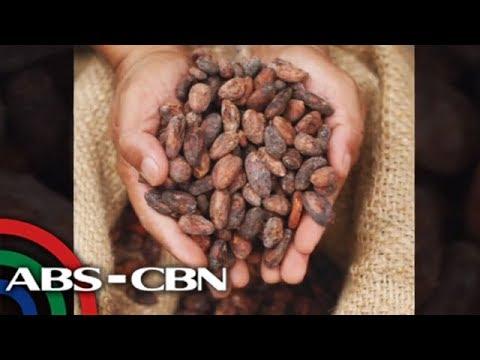 TV Patrol: Malagos chocolate nagkamit ng 'heirloom cacao' status