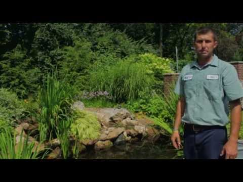 How to Clean Your Pond: A Quick Video