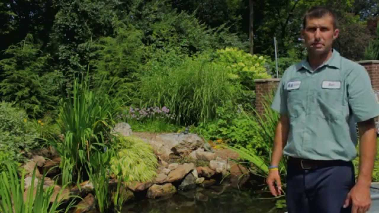 how to clean your pond a quick video