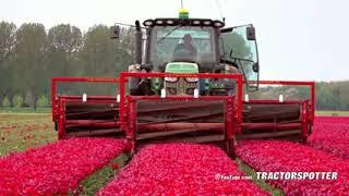Topping Tulips   John Deere 6R on Soucy Tracks   JVS triple topper   DJ Visser bloemen Holland   You