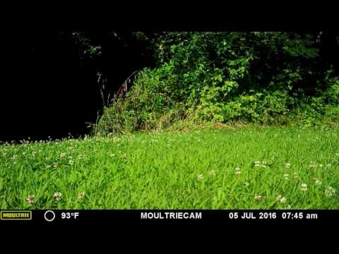 Second Video from July 5th 2016 Stray dogs Gambrills Md