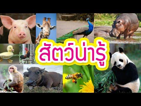 สัตว์น่ารู้ ชื่อสัตว์ ภาพชัด จำง่าย เหมาะสำหรับเด็ก l มาวินแฟมิลี่