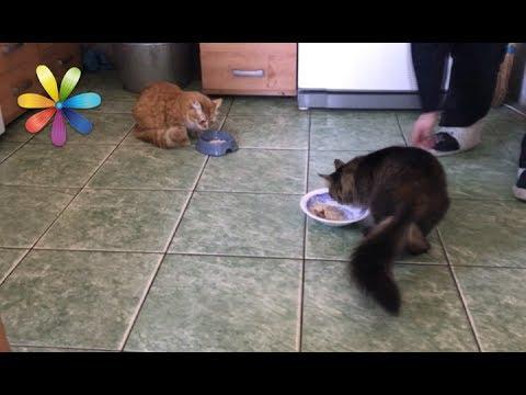 Как подружить котов между собой
