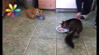 Как примирить двух котов, которые раньше не жили вместе – Все буде добре. Выпуск 1049 от 10.07.17