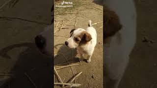 Funny videos funny dog