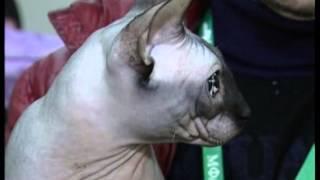 В Тамбове состоялась выставка кошек «Тамбовский кот тебе товарищ» /НВ - Тамбов/