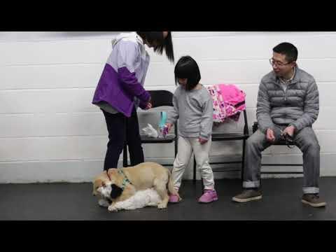 Canine Minds & Manners - Dog Training, Puppy Training - Calgary