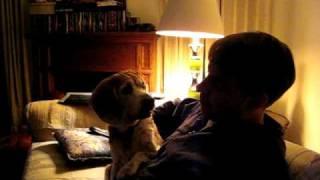 On Beagle Intelligence