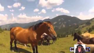 Смех для взрослых +18 Funny videos 2015 Laughter for adults +18