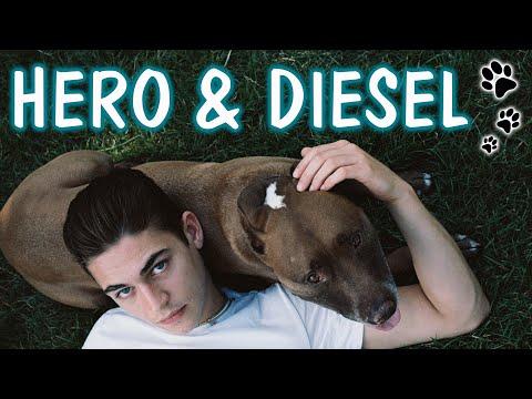 HERO FIENNES TIFFIN & HIS DOG DIESEL'S BTS SHOOT