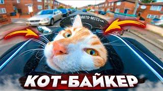 МОТО-СИТУАЦИИ #21 Мото-кот Кузя.
