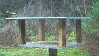 Bird Table & My Table