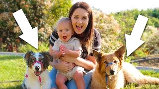DOGS REUNITED WITH FAMILY!