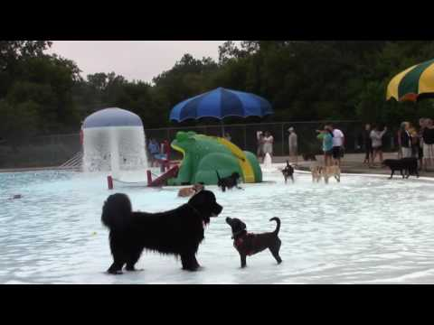 East Lansing Family Aquatic Center Dog Swim