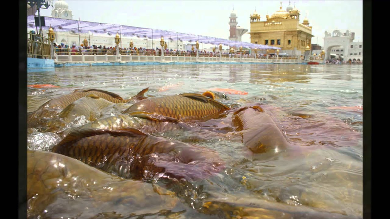 One Of The Most Sacred Place On Earth The Golden Temple Youtube