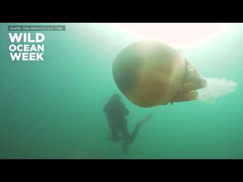 RIESENQUALLE: Spektakuläre Aufnahmen Vor Britischer Küste