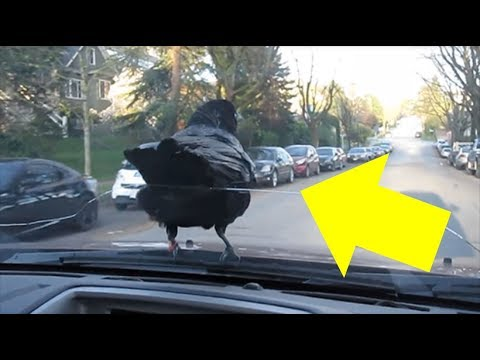 Man's Pet Bird Loves To Do This Whenever He Drives Anywhere And It's Kind Of Adorable