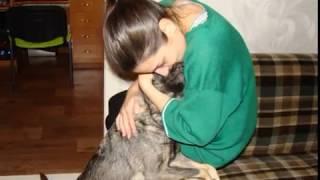 Собака ниже крыс\воспитание животных