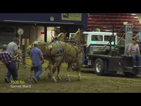 Syracuse,NY 2019 Heavyweight Horse Pull