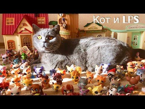 СМЕШНАЯ засада- БРИТАНСКИЙ КОТ и LPS /British Cat And Lps/Big Cat