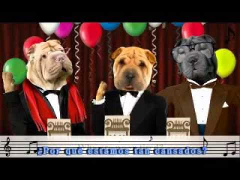 Feliz Cumpleaos Perros YouTube