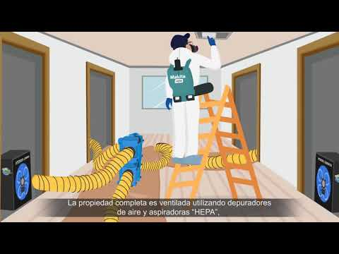 Exclusive: Mold Remediation Protocol - A Step By Step Process