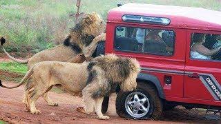👉 6 Minutes of Animals vs Cars Trucks Boats, Including Lions Bears Elephants Goats