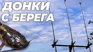 Рыбалка на донки с берега ловим американского сомика Жарим на мангале филе индейки с картофелем