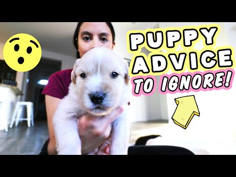 POPULAR PUPPY ADVICE TO AVOID!!!  Don't fall for these bad tips