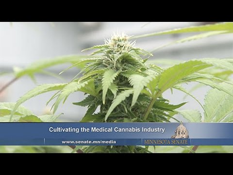 Minnesota's Medical Cannabis Industry Experiences Success, Challenges