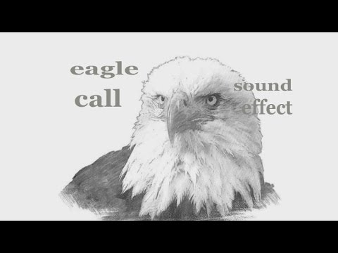 eagle calls sound effect animation youtube. Black Bedroom Furniture Sets. Home Design Ideas