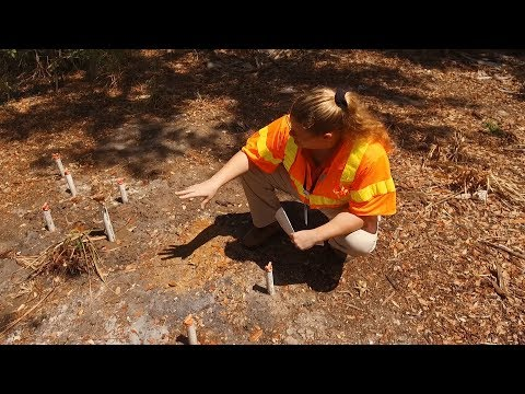 Charlotte County Utilities Department Intern Andreia Paulino