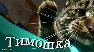 КОШКИ МЫШКИ  CATS and MOUSE