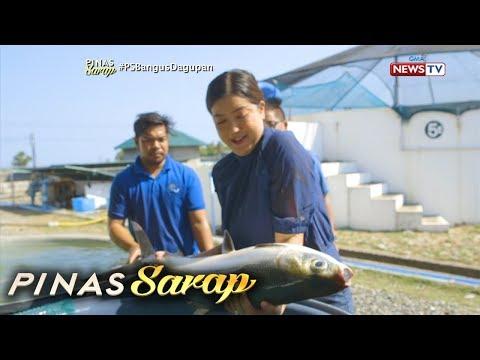 Pinas Sarap: Kara David, Binisita Ang Isang Milkfish Hatchery Sa Pangasinan