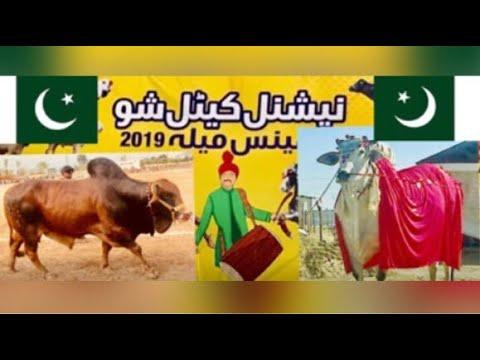 Best Pakistani COW Breeds Elite Animals. پاکستانی گاۓ کی اعلٰی نسلیں By Team Vet Dr M Haris Khan