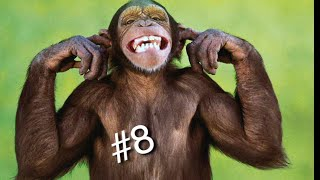 ЛУЧШИЕ ПРИКОЛЫ 2020 | ПОДБОРКА ПРИКОЛОВ СМЕХ ДО СЛЁЗ | FUNNY VIDEO 2020 || Смешные обезьянки |